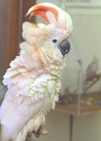 o°°o°°o°*~.] [ علاقة الانسان بالطيور ][.~* °o°°o°°o Molucc01